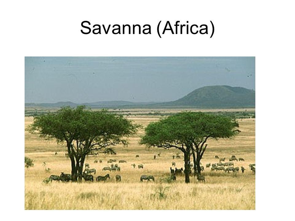 Savanna (Africa)