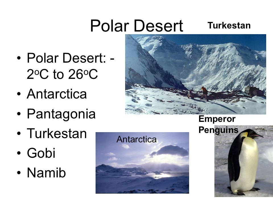 Polar Desert Polar Desert: - 2 o C to 26 o C Antarctica Pantagonia Turkestan Gobi Namib Emperor Penguins Antarctica Turkestan