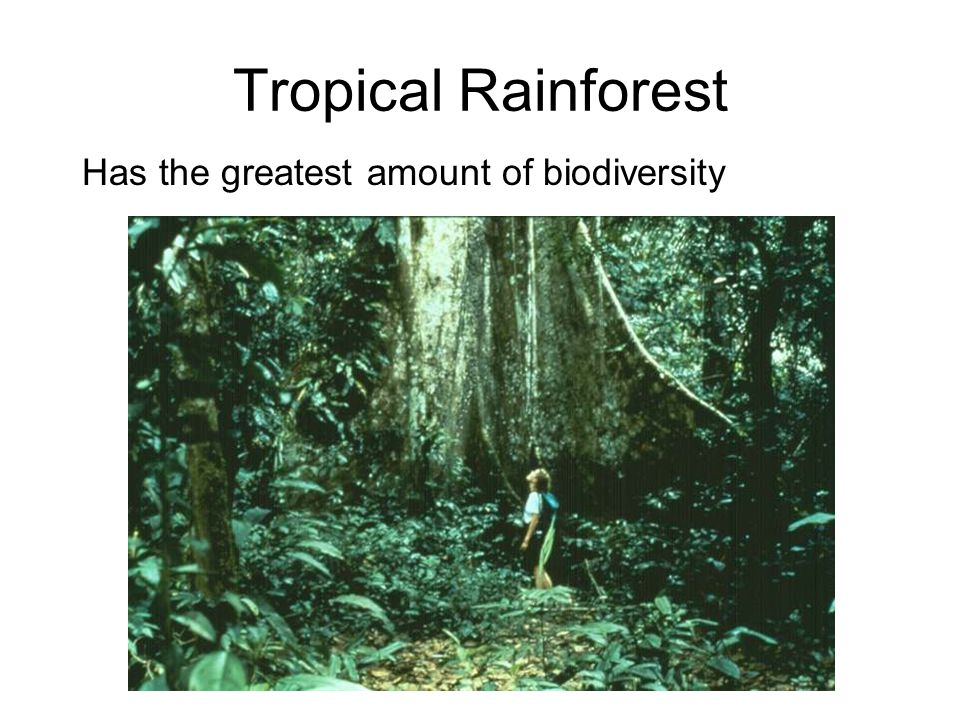 Tropical Rainforest Has the greatest amount of biodiversity