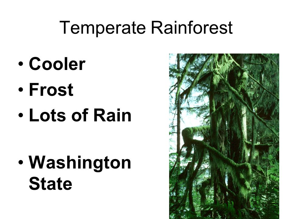 Temperate Rainforest Cooler Frost Lots of Rain Washington State