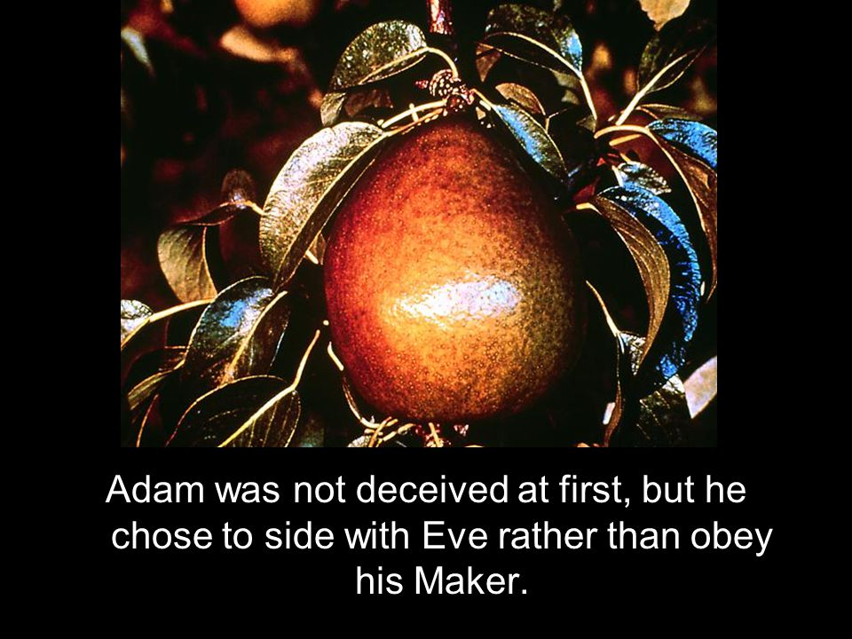 Adam was not deceived at first, but he chose to side with Eve rather than obey his Maker.
