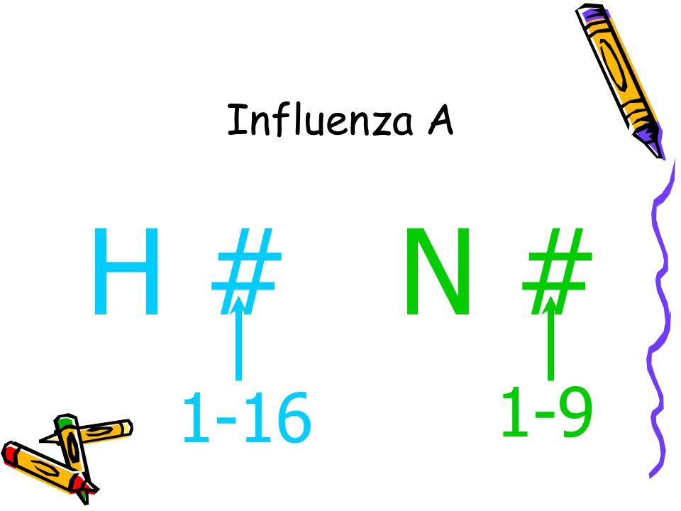Influenza A H #N # 1-16 1-9