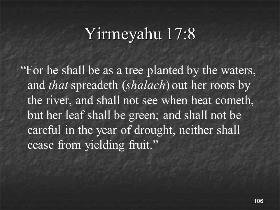 106 Yirmeyahu 17:8 For he shall be as a tree planted by the waters, and that spreadeth (shalach) out her roots by the river, and shall not see when heat cometh, but her leaf shall be green; and shall not be careful in the year of drought, neither shall cease from yielding fruit.