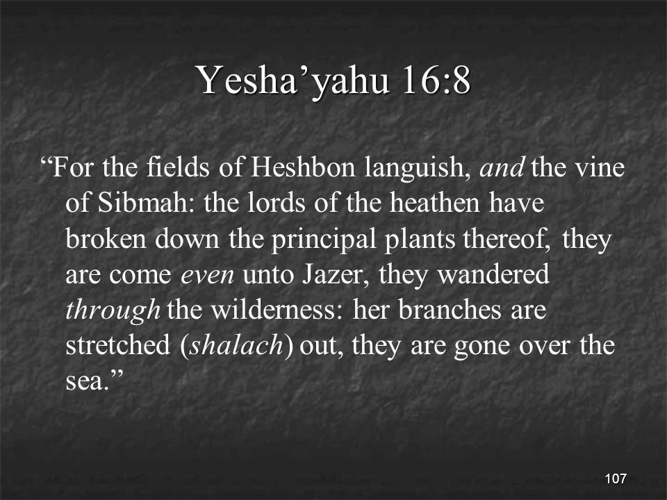 107 Yesha'yahu 16:8 For the fields of Heshbon languish, and the vine of Sibmah: the lords of the heathen have broken down the principal plants thereof, they are come even unto Jazer, they wandered through the wilderness: her branches are stretched (shalach) out, they are gone over the sea.