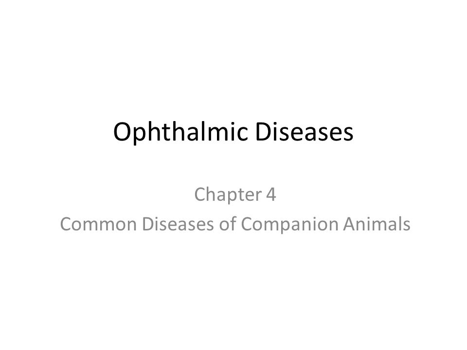 Ophthalmic Diseases Chapter 4 Common Diseases of Companion Animals