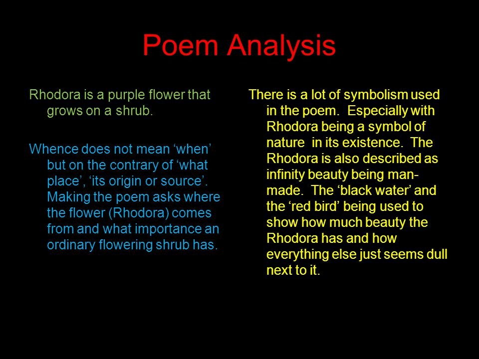 Poem Analysis Rhodora is a purple flower that grows on a shrub.