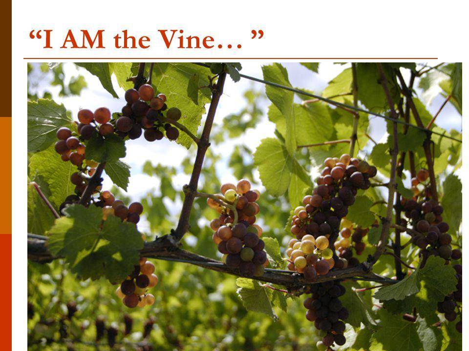 I AM the Vine…