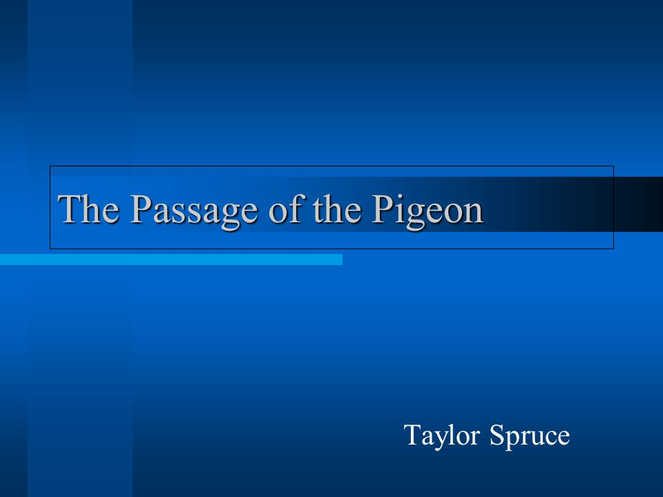The Passage of the Pigeon Taylor Spruce