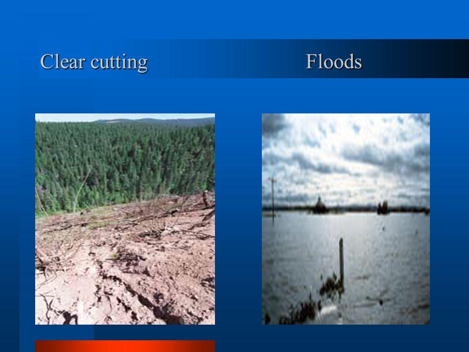 Clear cutting Floods