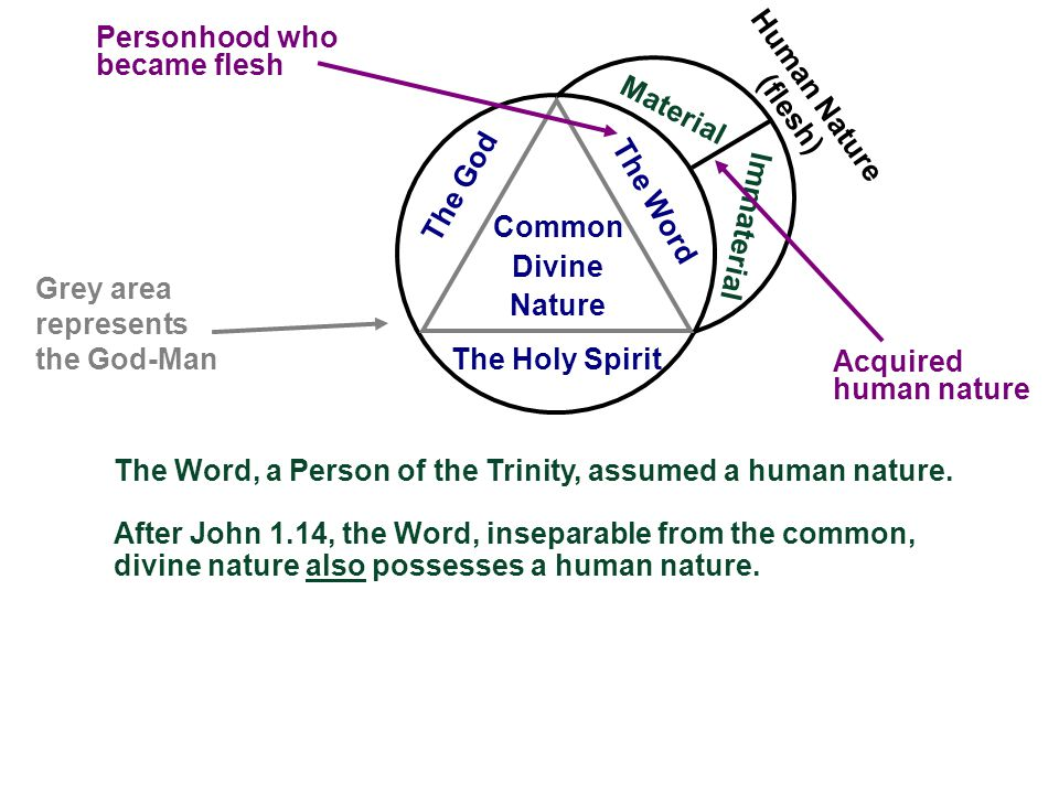 Material Immaterial Human Nature (flesh) Acquired human nature The Holy Spirit The Word The God Common Divine Nature The Word, a Person of the Trinity, assumed a human nature.