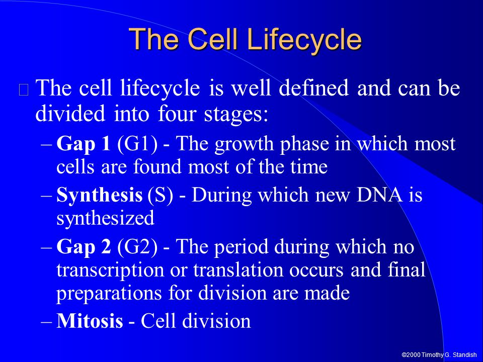 ©2000 Timothy G. Standish The Cell Lifecycle The cell lifecycle is well defined and can be divided into four stages: –Gap 1 (G1) - The growth phase in