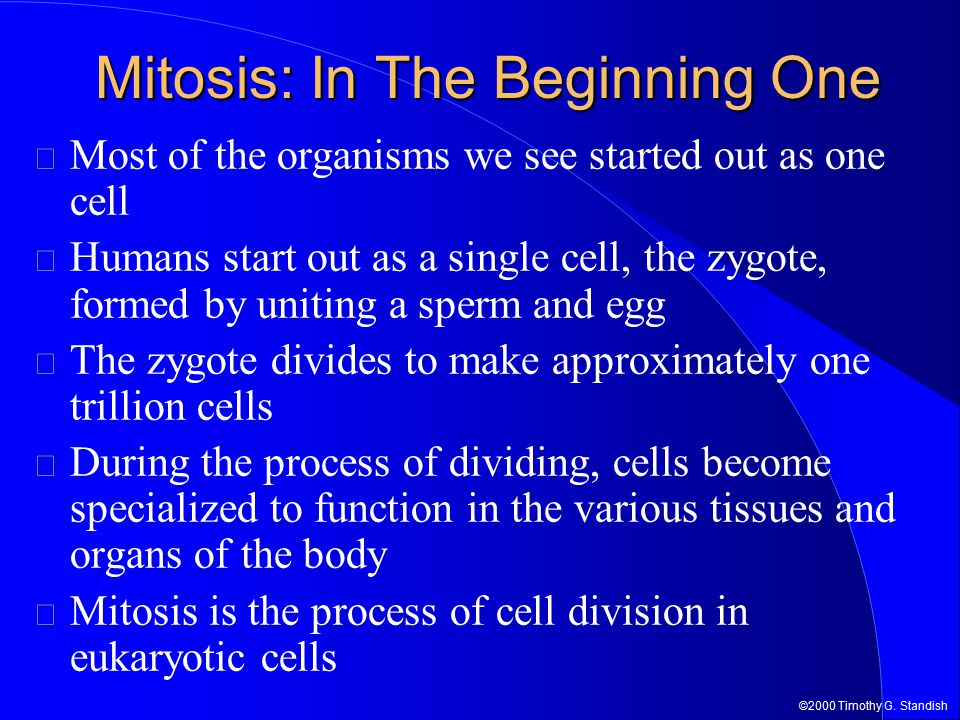 ©2000 Timothy G. Standish Mitosis: In The Beginning One Most of the organisms we see started out as one cell Humans start out as a single cell, the zy