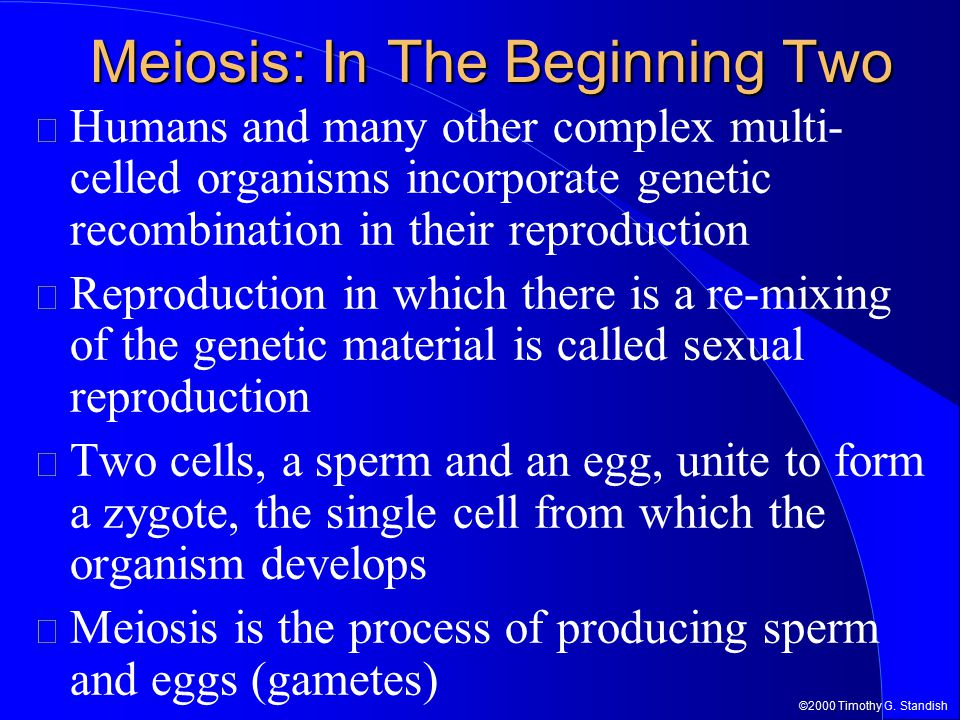 Meiosis: In The Beginning Two Humans and many other complex multi- celled organisms incorporate genetic recombination in their reproduction Reproducti