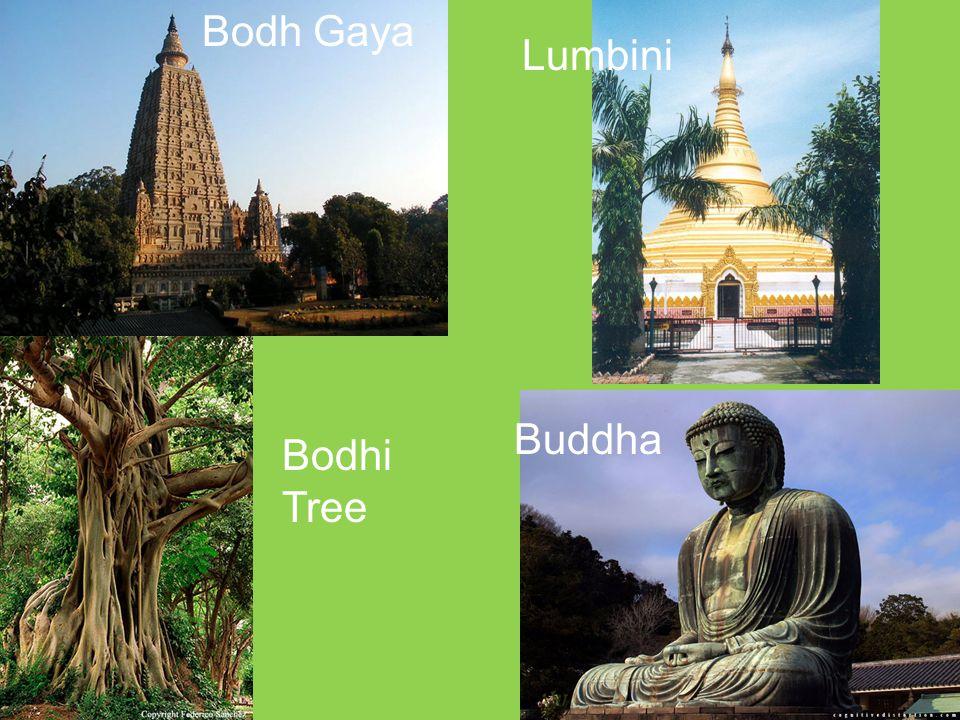 Bodh Gaya Buddha Bodhi Tree Lumbini