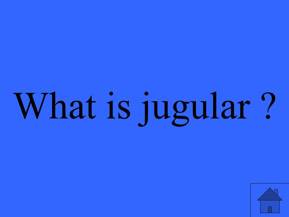 What is jugular