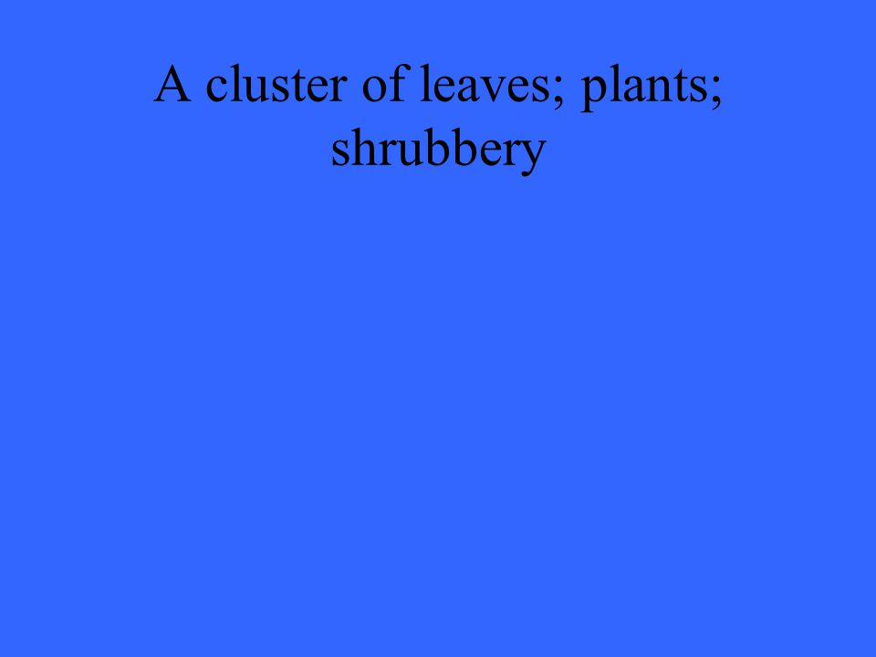 A cluster of leaves; plants; shrubbery