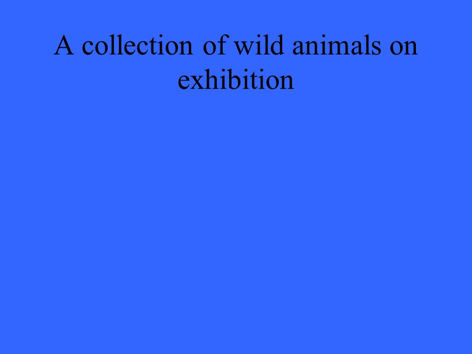 A collection of wild animals on exhibition