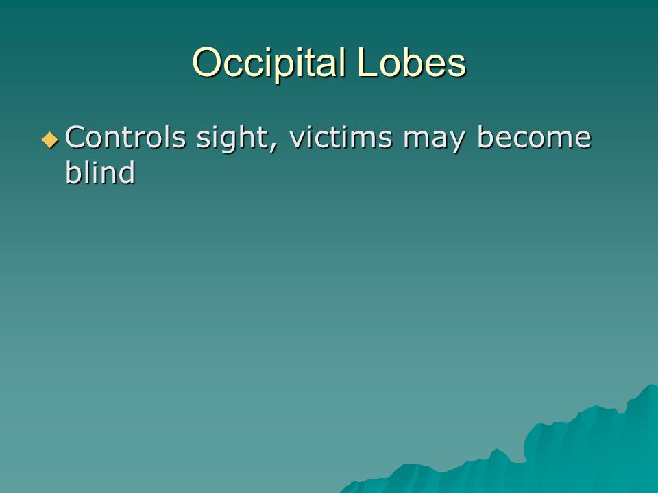 Occipital Lobes  Controls sight, victims may become blind