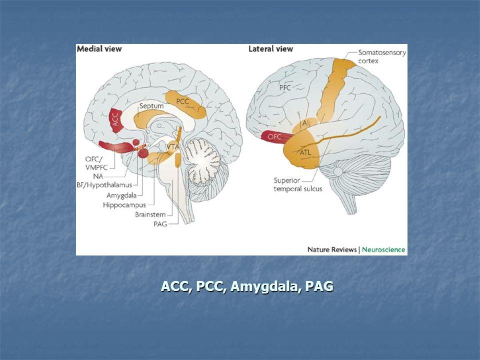ACC, PCC, Amygdala, PAG
