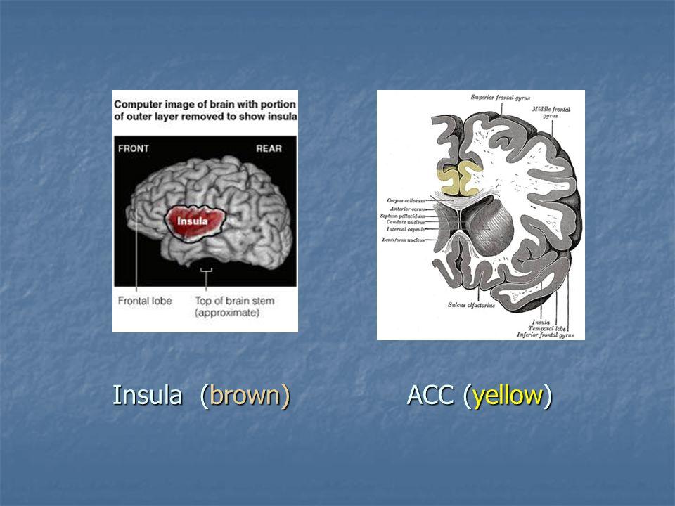 Insula (brown) ACC (yellow)