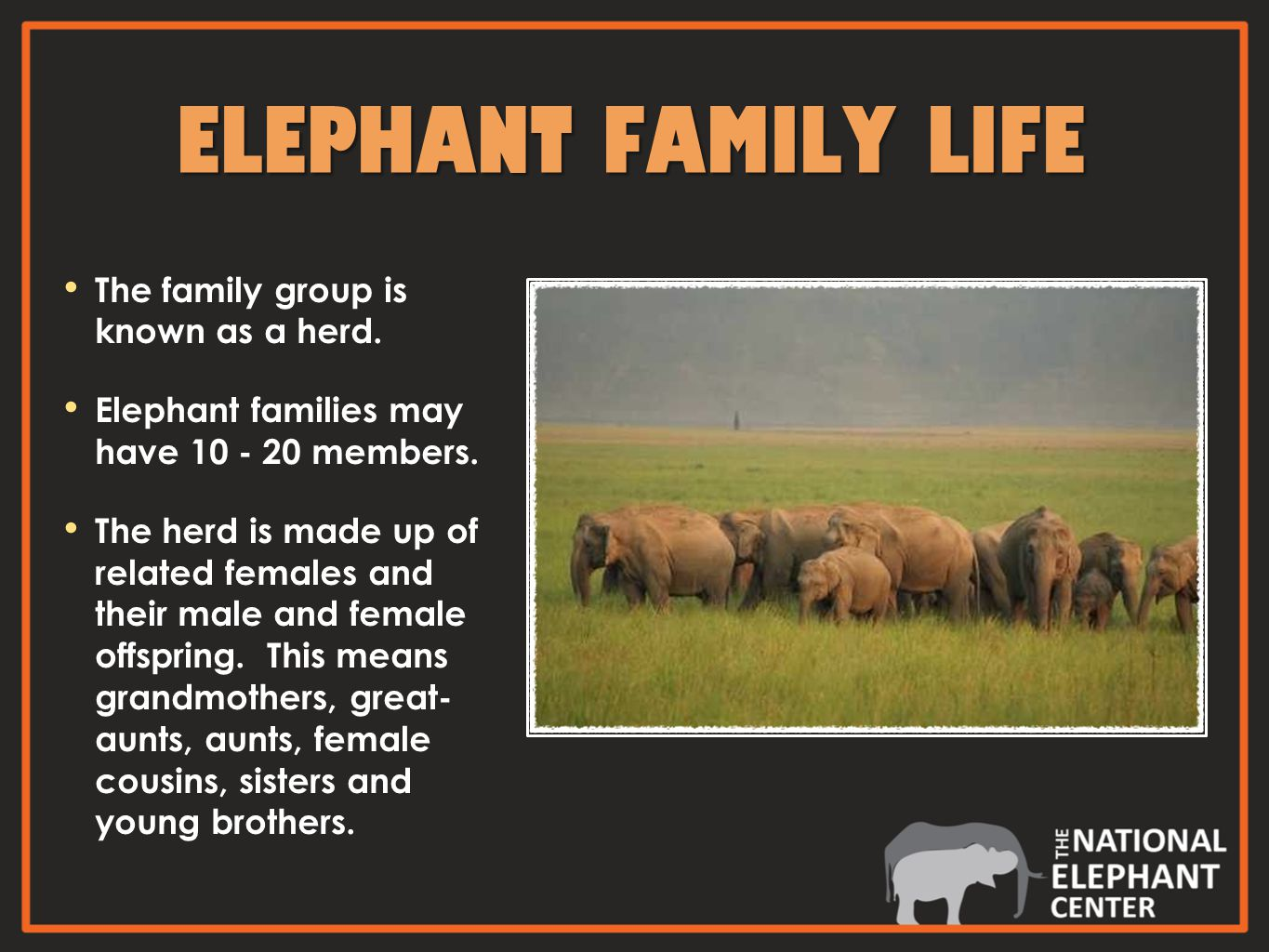 ELEPHANT FAMILY LIFE The family group is known as a herd.