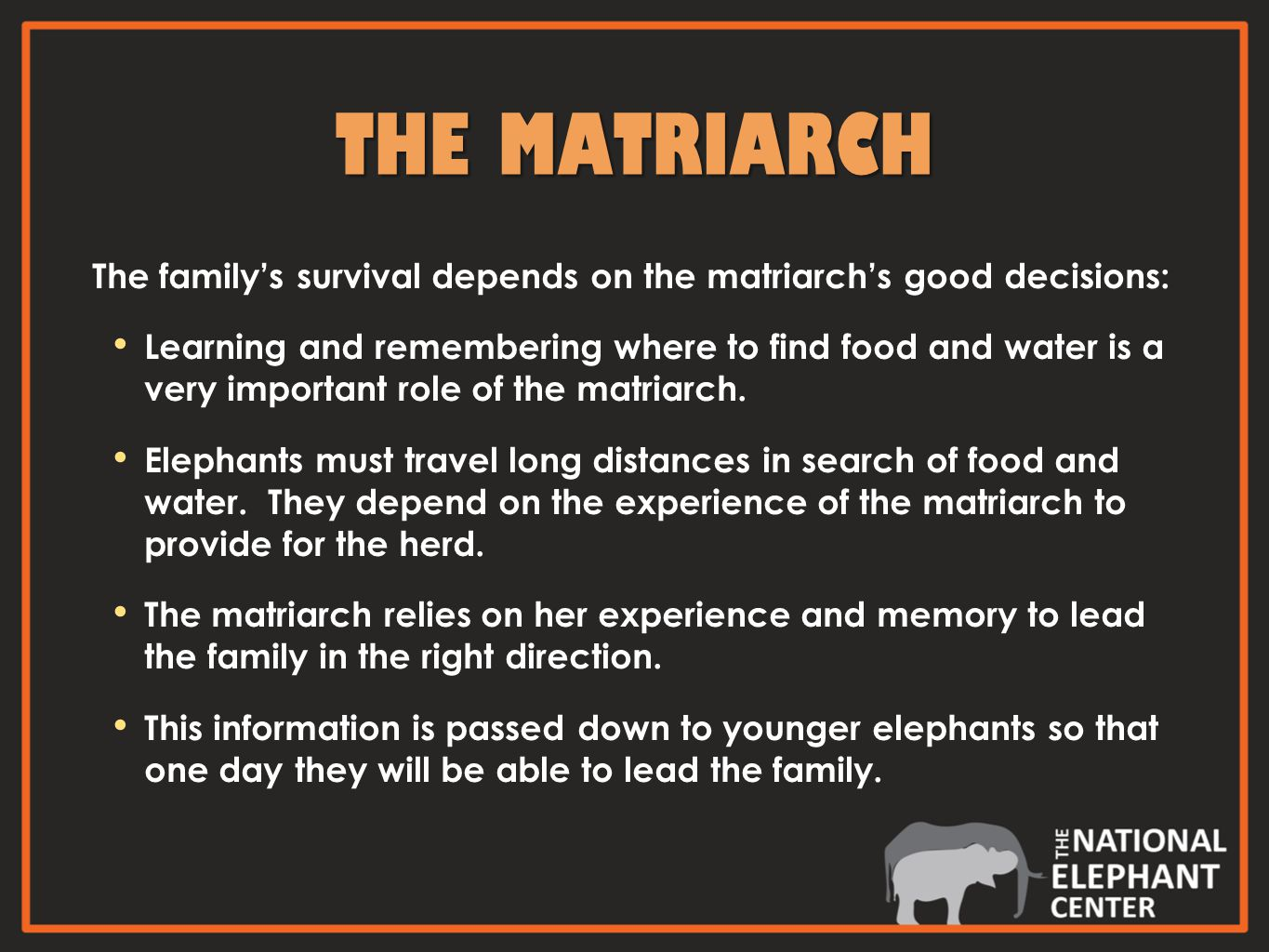 THE MATRIARCH The family's survival depends on the matriarch's good decisions: Learning and remembering where to find food and water is a very important role of the matriarch.