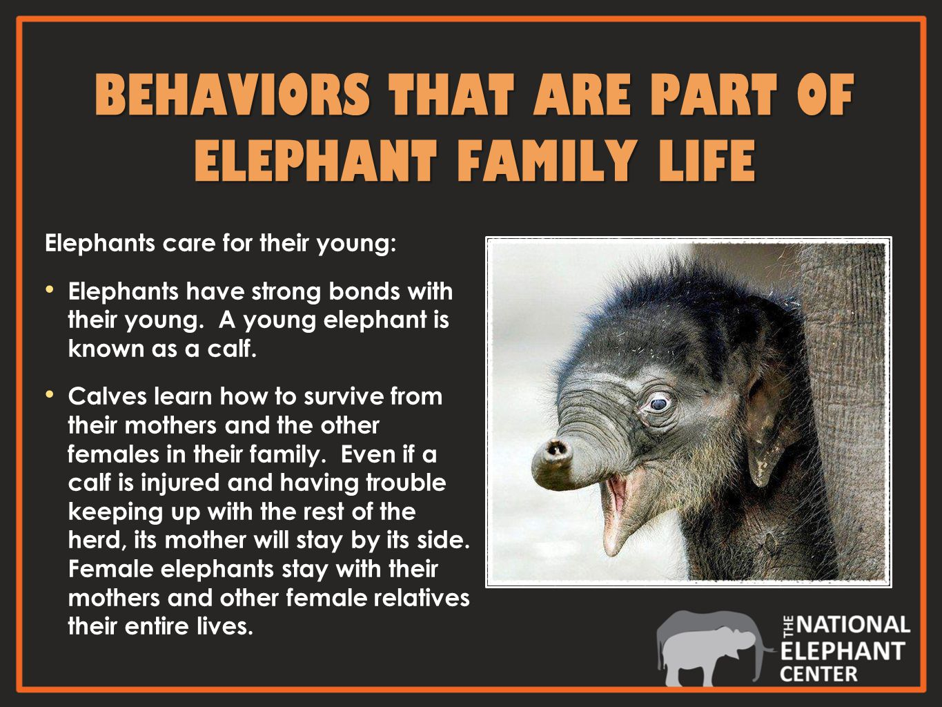 Elephants care for their young: Elephants have strong bonds with their young.