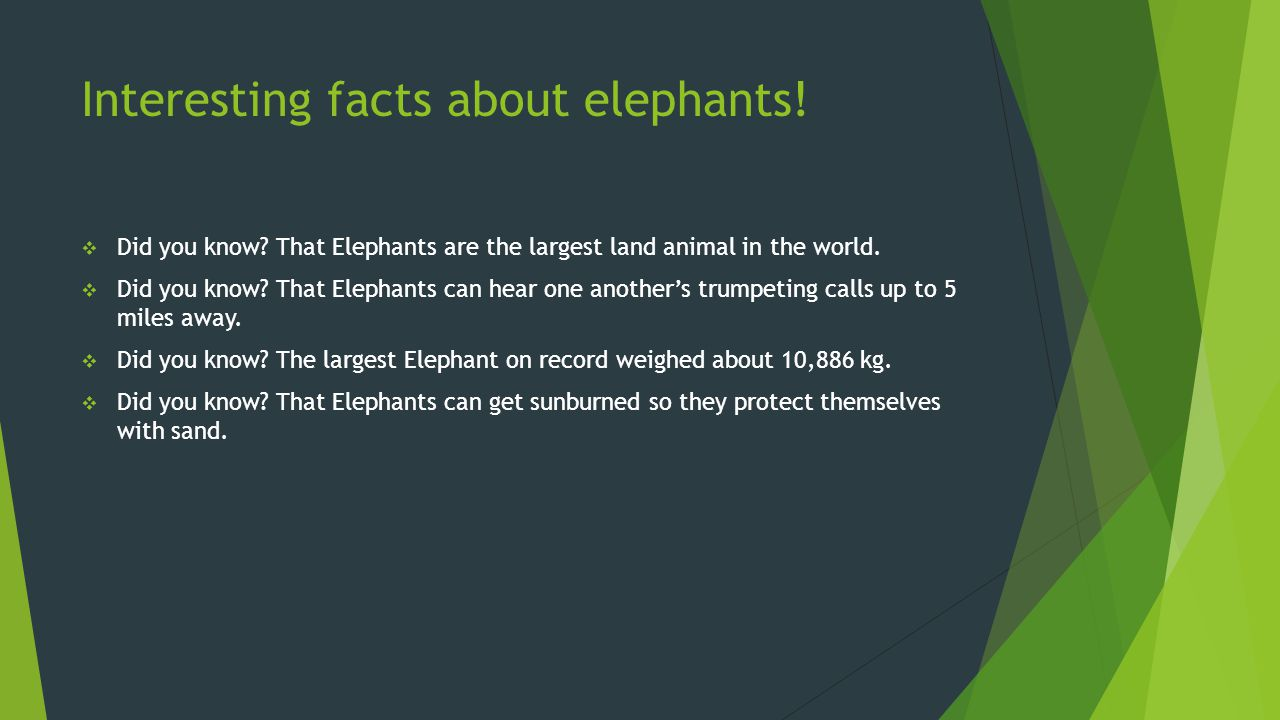 Interesting facts about elephants!  Did you know? That Elephants are the largest land animal in the world.  Did you know? That Elephants can hear on