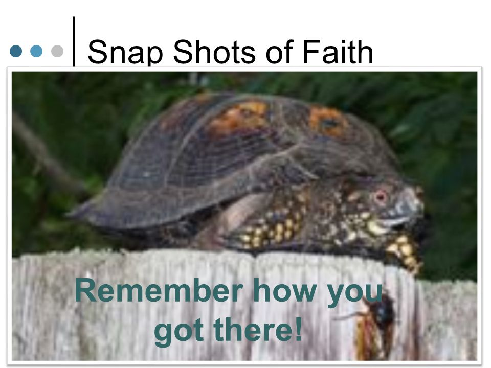 Snap Shots of Faith The Centurion Caring Heart Humble Understood Authority Believed in Jesus' Authority The Disciples Hard Hearts Proud Misunderstood