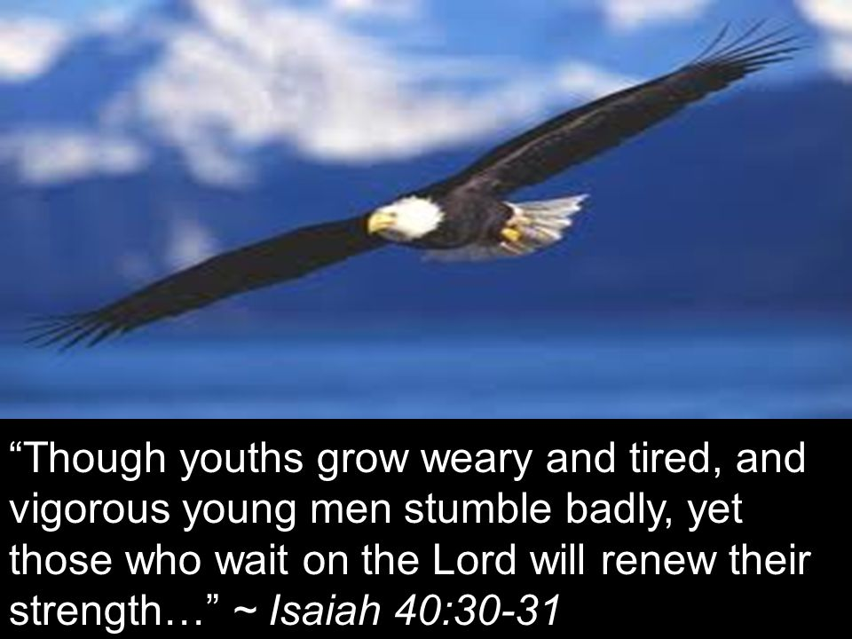 Though youths grow weary and tired, and vigorous young men stumble badly, yet those who wait on the Lord will renew their strength… ~ Isaiah 40:30-31