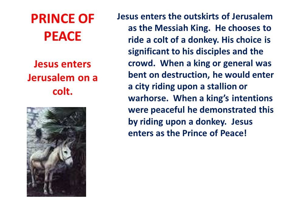 PRINCE OF PEACE Jesus enters the outskirts of Jerusalem as the Messiah King.