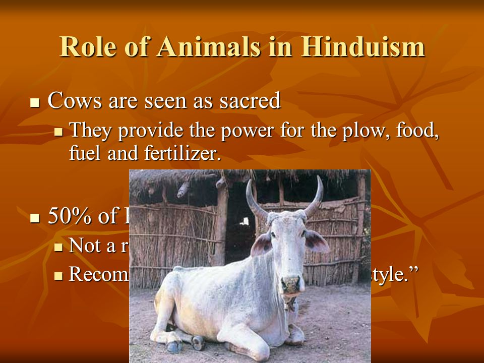 Role of Animals in Hinduism Cows are seen as sacred Cows are seen as sacred They provide the power for the plow, food, fuel and fertilizer.