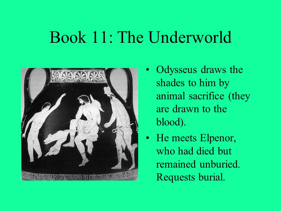 Book 11: The Underworld Odysseus draws the shades to him by animal sacrifice (they are drawn to the blood). He meets Elpenor, who had died but remaine