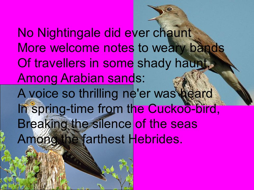 No Nightingale did ever chaunt More welcome notes to weary bands Of travellers in some shady haunt, Among Arabian sands: A voice so thrilling ne'er wa
