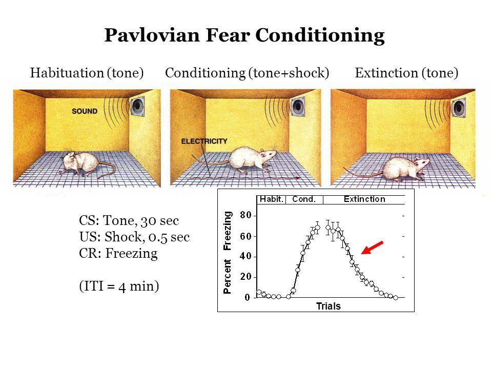 Trials Pavlovian Fear Conditioning Habituation (tone)Conditioning (tone+shock)Extinction (tone) CS: Tone, 30 sec US: Shock, 0.5 sec CR: Freezing (ITI = 4 min)