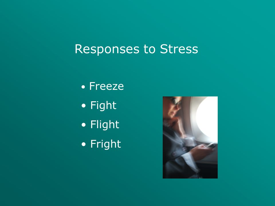 Responses to Stress Freeze Fight Flight Fright