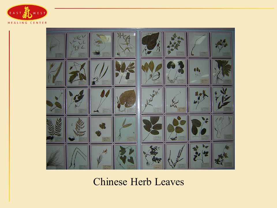 Chinese Herb Leaves