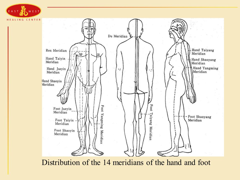 Distribution of the 14 meridians of the hand and foot