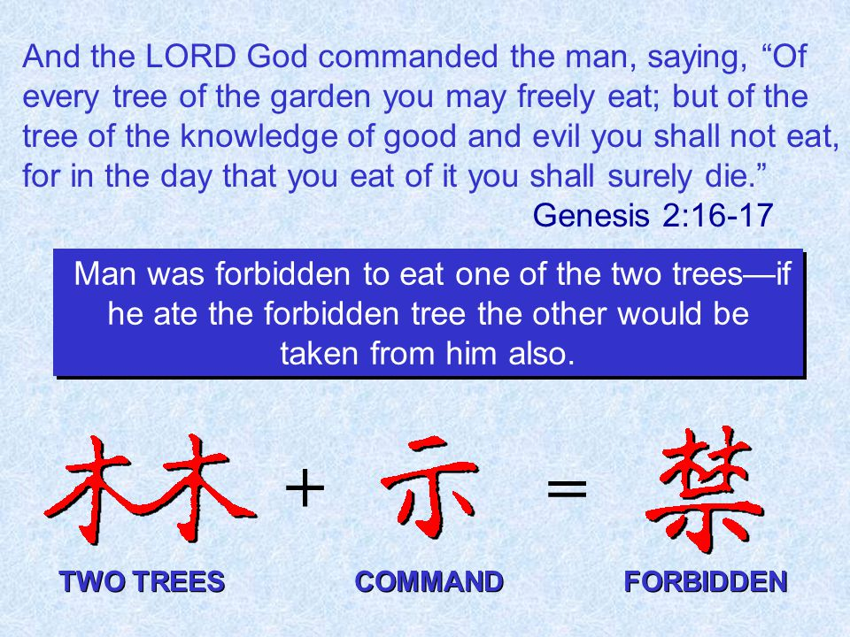 And the LORD God commanded the man, saying, Of every tree of the garden you may freely eat; but of the tree of the knowledge of good and evil you shall not eat, for in the day that you eat of it you shall surely die. Genesis 2:16-17 + = Man was forbidden to eat one of the two trees—if he ate the forbidden tree the other would be taken from him also.