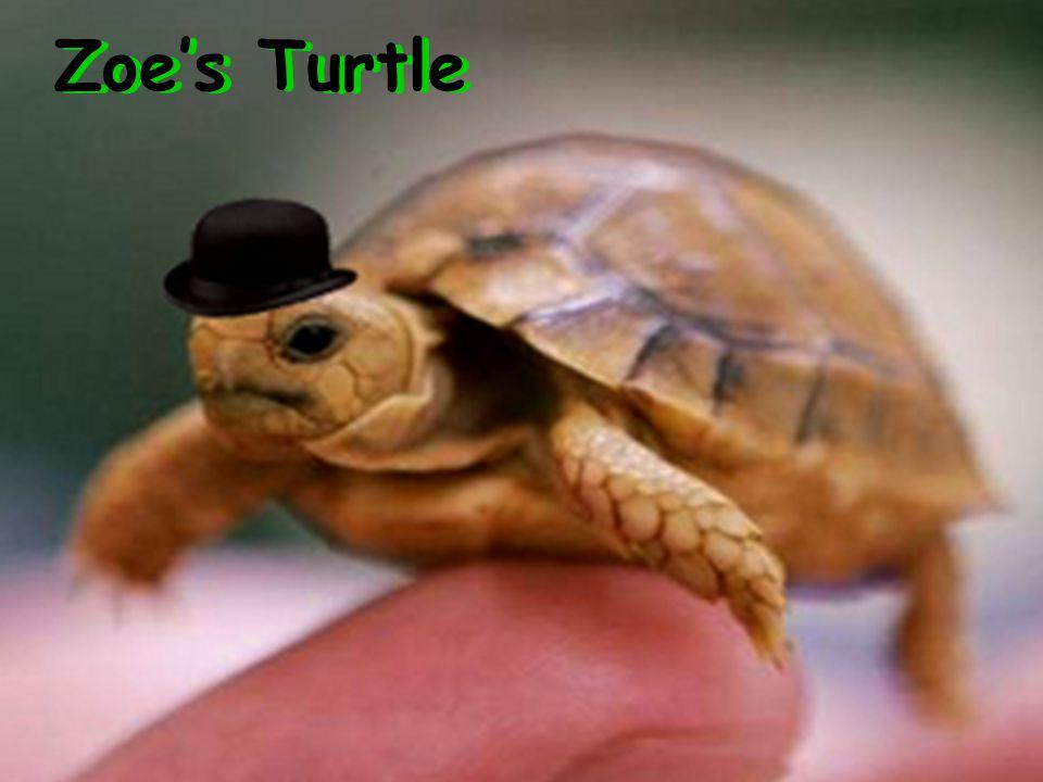Zoe's Turtle