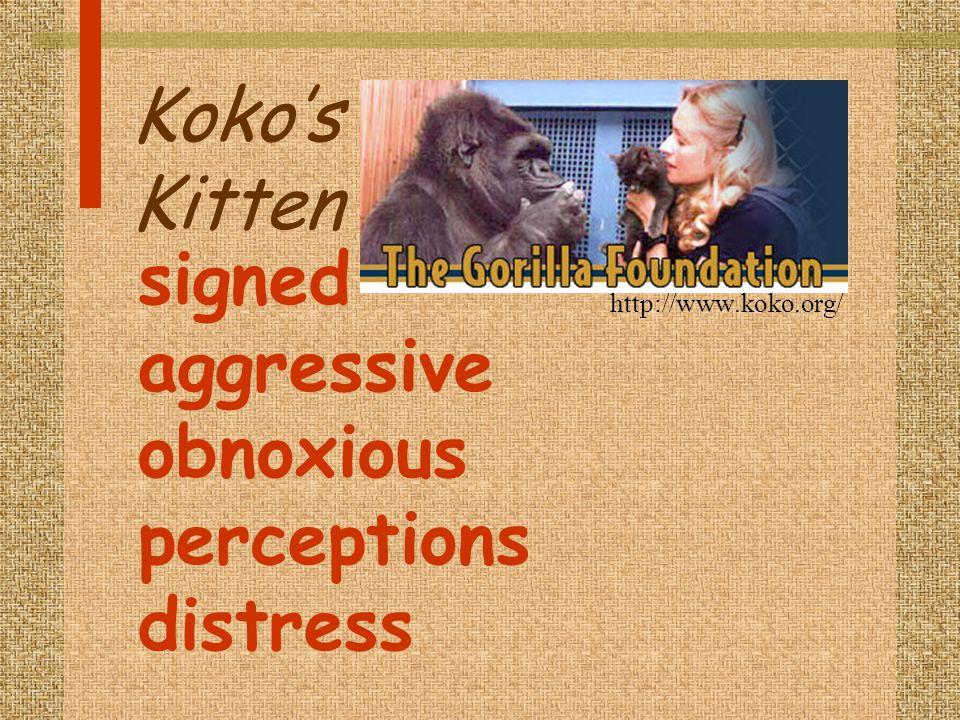 Koko's Kitten http://www.koko.org/ signed aggressive obnoxious perceptions distress
