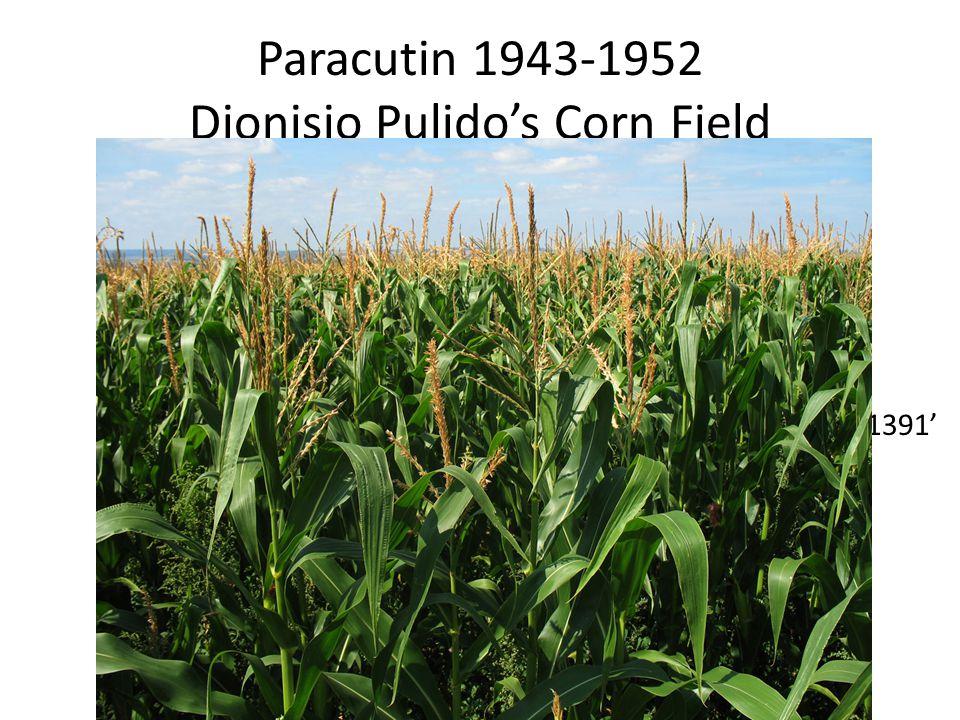 Paracutin 1943-1952 Dionisio Pulido's Corn Field 1391'