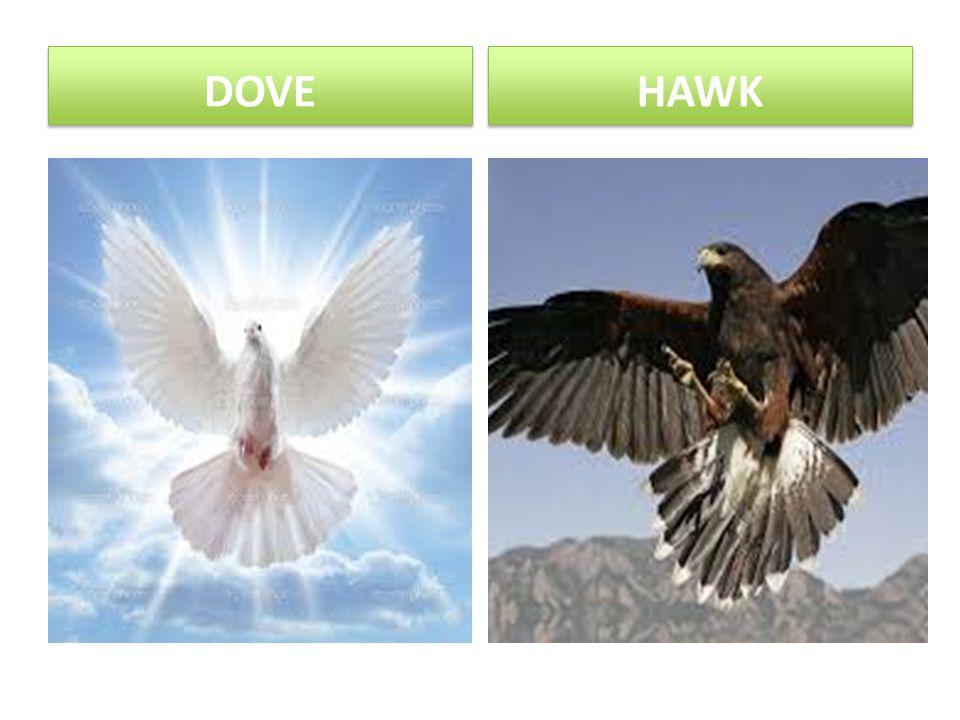 DOVE HAWK