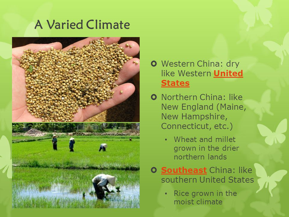 A Varied Climate  Western China: dry like Western United States  Northern China: like New England (Maine, New Hampshire, Connecticut, etc.) Wheat and millet grown in the drier northern lands  Southeast China: like southern United States Rice grown in the moist climate