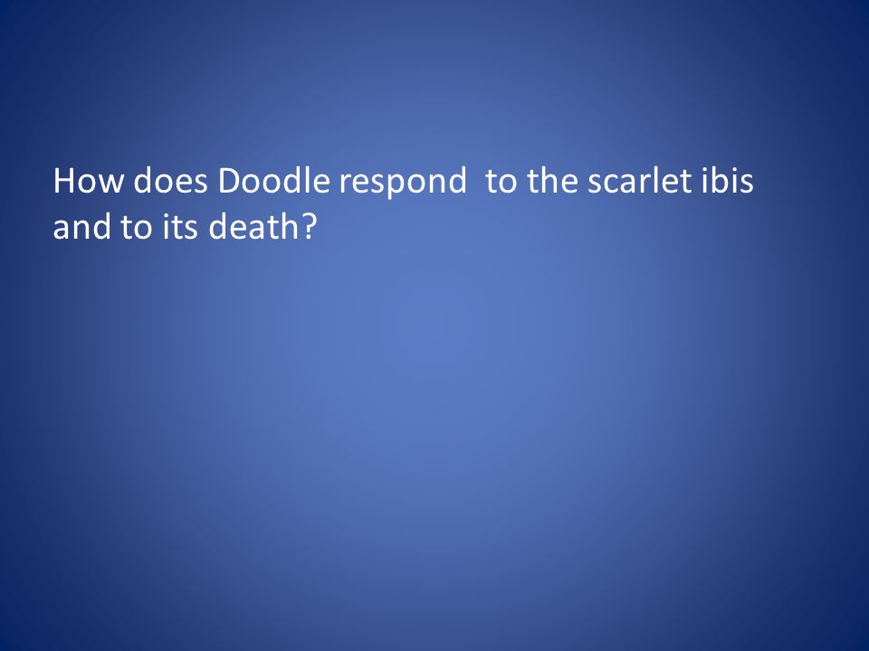 How does Doodle respond to the scarlet ibis and to its death?