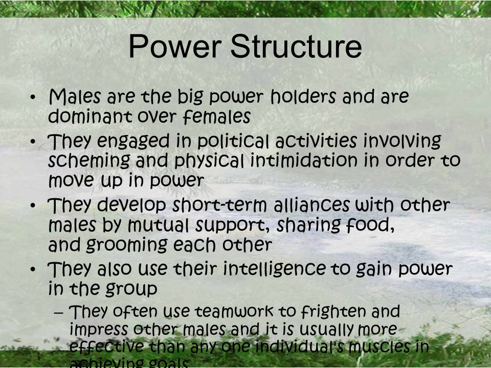 Power Structure Males are the big power holders and are dominant over females They engaged in political activities involving scheming and physical intimidation in order to move up in power They develop short-term alliances with other males by mutual support, sharing food, and grooming each other They also use their intelligence to gain power in the group – They often use teamwork to frighten and impress other males and it is usually more effective than any one individual s muscles in achieving goals