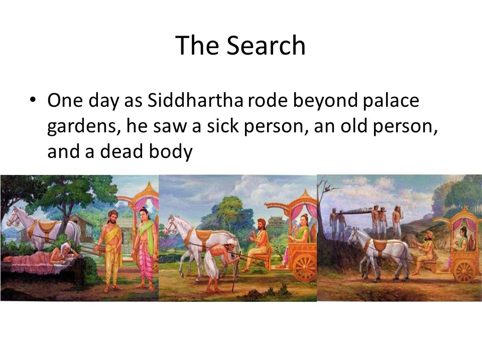 The Search One day as Siddhartha rode beyond palace gardens, he saw a sick person, an old person, and a dead body