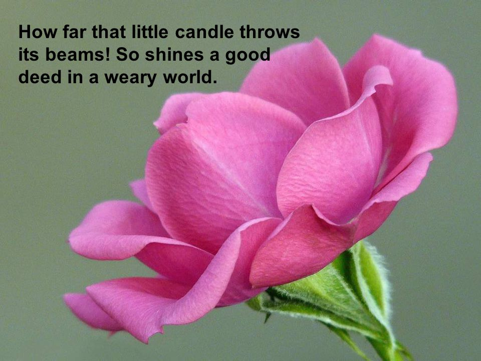 How far that little candle throws its beams! So shines a good deed in a weary world.