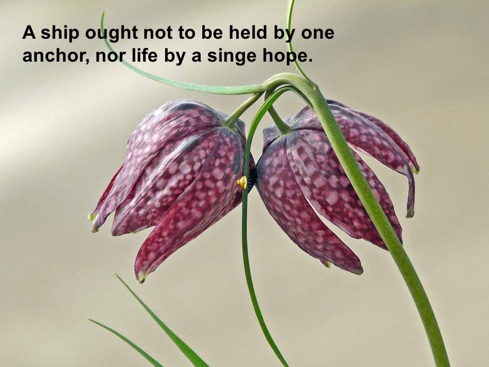 A ship ought not to be held by one anchor, nor life by a singe hope.