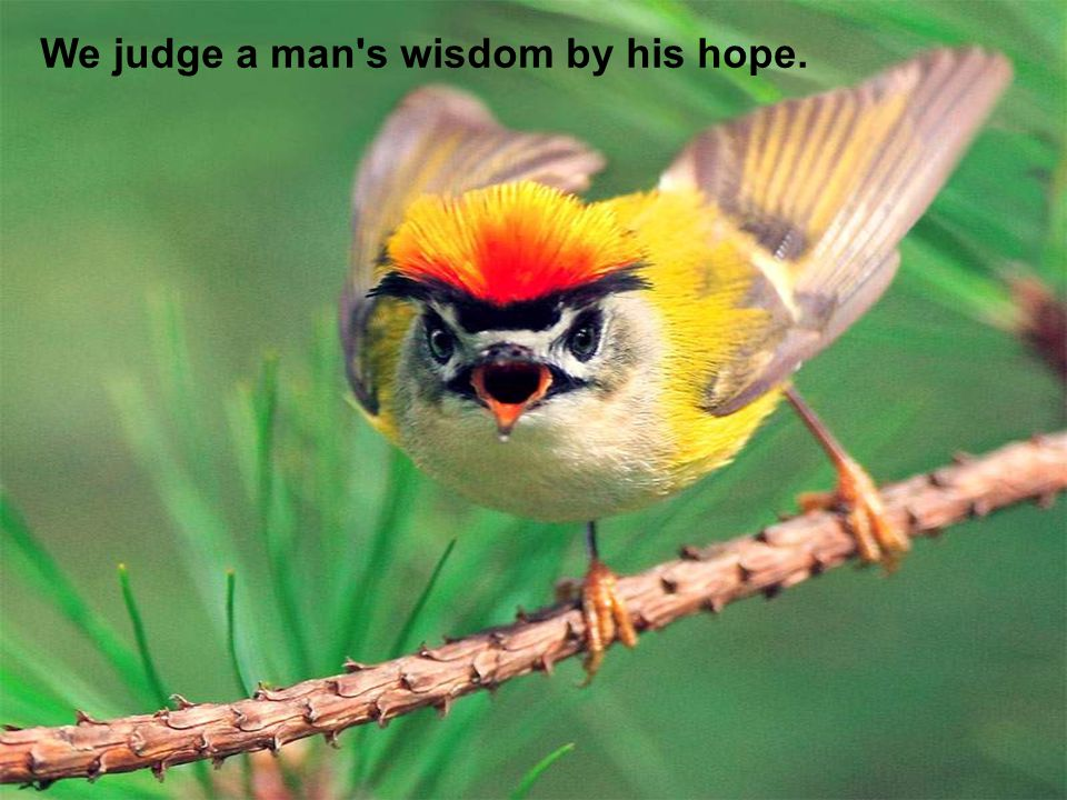 We judge a man s wisdom by his hope.
